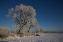 snow-tree_fbu