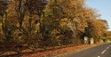 leafy-lane