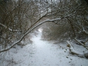 winter002