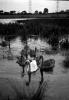 1954-carrs-pond