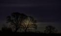 Full Moon From Back Garden